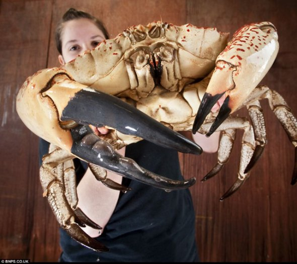 Giant-crab-2